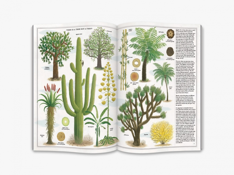 9780500651698_in02_the-book-of-trees